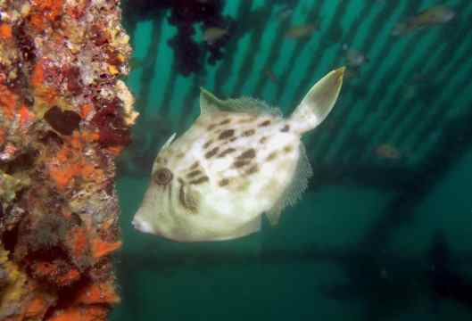 Scuba diving in Hatsishima Japan